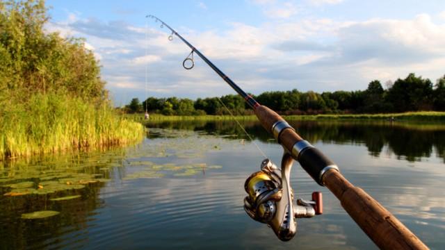Рост производства рыбной продукции наблюдается в Ленинградской области